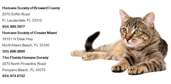 June Adopt-A-Cat Month