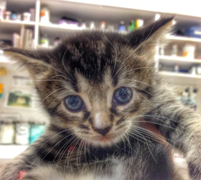Willow Kitten 1.4